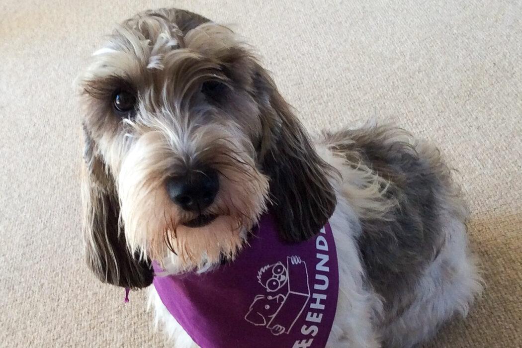 en hund med et læsehundetørklæde